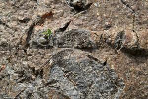écorce de baobab sauvage biologique utilisé à titre médical depuis des millénaire en Afrique
