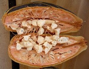 Le pain de singe biologique certifié Ecocert